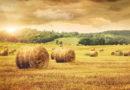 Пенсии для аграриев