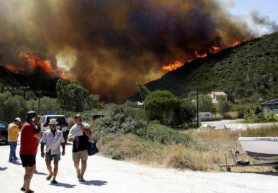 Власти Греции восстановят лесные массивы в пострадавших от природных пожаров районах